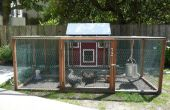 Urban Farming: Verhogen achtertuin kippen