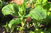 Como plantaire Berza nl El Huerto