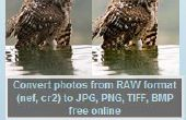 RAW-Converter: een gratis software voor het converteren van RAW naar JPG