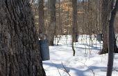 Hoe snoep maken van bomen