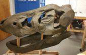 Maken van een T-Rex schedel van Scratch