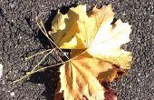 Hoe om foto's van bladeren