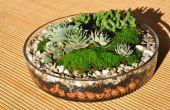 De grondbeginselen van het terrarium planten.
