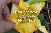 Opslaan van kunstmest, uw zak, de wereld en gezondere planten krijgen met behulp van Mycorrhiza