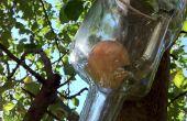 How To Grow een appel In een fles