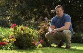 TruGreen voorjaar gazon: Gevoel van hoop