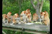 Hongerige apen: waar om voedsel te krijgen voor onder $10 bij Pier 9