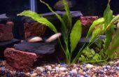 Spraypaint aquarium backgrorund