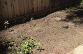 Hoe om te beginnen met een prachtige tuin