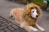 Lion hond kostuum