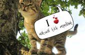Natuurlijke Tick Repellent voor katten