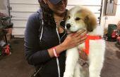 Bouwen van uw eigen hondenhuis