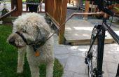 Een goedkope en veiliger fiets Doggy Walker