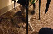 Kat & muis spelen speelgoed
