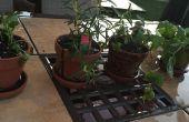 Potten en planten kruiden voor Beginners