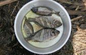 Invasieve soorten eten: Zambiaanse Pan Gebakken Tilapia