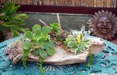 3 manieren om te hechten vetplanten aan drijfhout om ze te groeien
