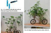 Groeiende kamerplanten?
