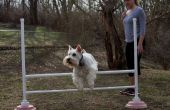 Portable hond Agility Bar sprong