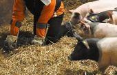 Het varken empathie pak