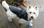 Regenjas snel, goedkoop en hondje
