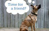 Hoe te kiezen voor een tweede hond