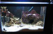 Hoe te installeren en bouwen van een zelf opgenomen zoutwater Aquarium met ingebouwde toevluchtsoord