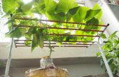 Hoe groeien komkommer binnenshuis