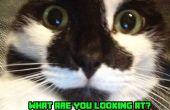 Omgaan met de première van uw kat thuis!