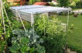 Bouwen van een schuilplaats voor de teelt van tomaten