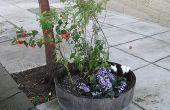 Hoe plant bloemen op uw stoep