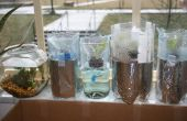 Sla hydrocultuur tuin van plastic flessen (Grow flessen)