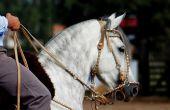 Voorbereiden van een Horseback het berijden reis