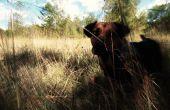 Hond tot hond van de Baskervilles: huisdier foto bewerken