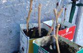 Stekken van vijgen (en andere hardhouten stekken)