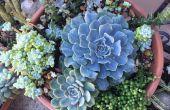Hoe maak je een geweldig succulente Planter
