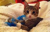 Veer-on-a-Stick Cat Toy