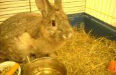 Hoe de zorg voor een onlangs gecastreerd/gesteriliseerd konijn