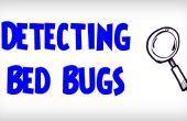 ULTIEME gids op hoe te detecteren Bed Bugs | Opsporing van de besmetting van een Bed Bug
