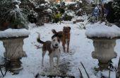 Hoe te houden een hond geamuseerd in de sneeuw