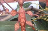 Zorg voor Australische Spiny blad insecten nemen