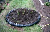 Bouw een moeras voor vleesetende planten in uw achtertuin!