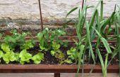 Achtertuin planter en zitplaatsen
