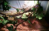 Brengen van buiten naar binnen, het creëren van een vivarium voor een Python tapijt