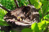 Vogel Nest van Husk