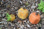 Pallet blok pompoenen
