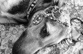 Zwarte & White - mobiele telefoon huisdier foto's, deel 2