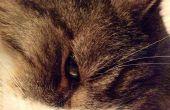 Hoe te nemen Super goede foto's van katten