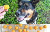 Zoete aardappel hond behandelt recept