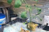 Super Easy Aquaponic systeem